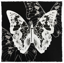 "Load image into Gallery viewer, ""Metamorphosis, White Butterfly on Black"" by Rubem Robierb"