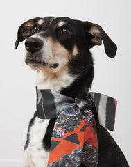 The Poppy Scarf on dog