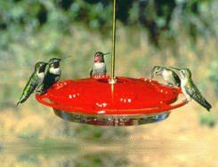 Aspects Hummingbird Hummzinger Feeder