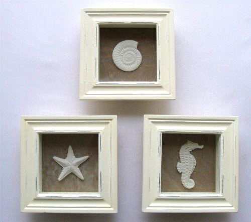 Sealife Shadow Boxes, 3 Asst