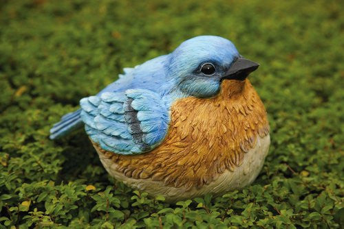 Bluebird Portly  Medium