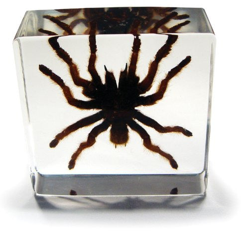 Desk Decoration - small Tarantula (3 x 3 x 1 1/8 in)