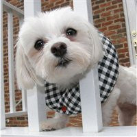 Black and White Check Puppy Bumper® 10 to 13""