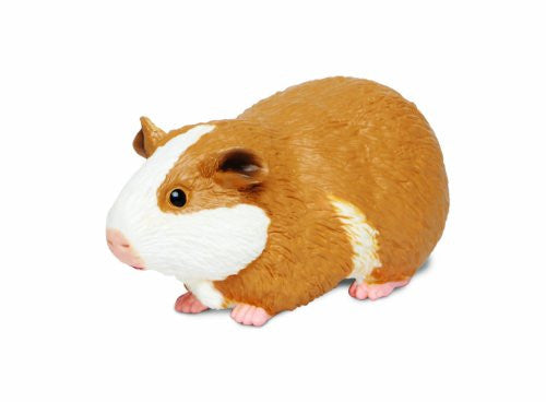 Guinea Pig Incredible Creatures