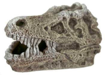 T-Rex Skull - Mini Approximately 2 inches