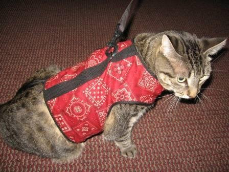 Kitty Holster Cat Harness, Extra Large, Red Bandana