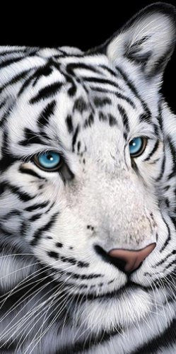"Tiger Blue Eyes Towel 30"" X 60"""