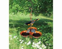 Oriole Jelly Feeder Triple Cup with Ivy
