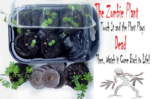 The Zombie Plant Growing Kit With Seed Packet