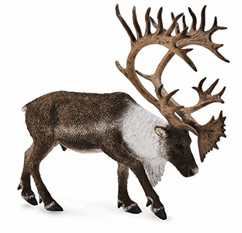 Woodland Caribou, XL