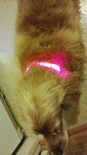 Load image into Gallery viewer, Nylon LED Pet Dog Collar for Night Safety