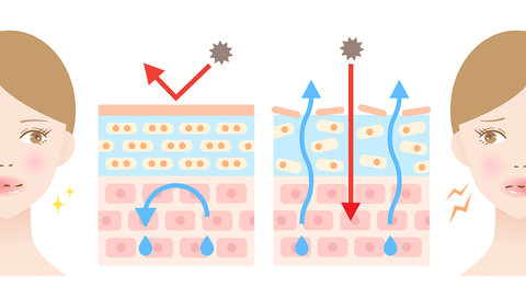 Illustration showing negative effect of pollution on collagen in skin