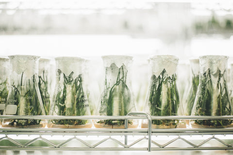 Plants in test tubes.