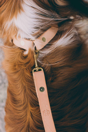 Slim Dog Collar