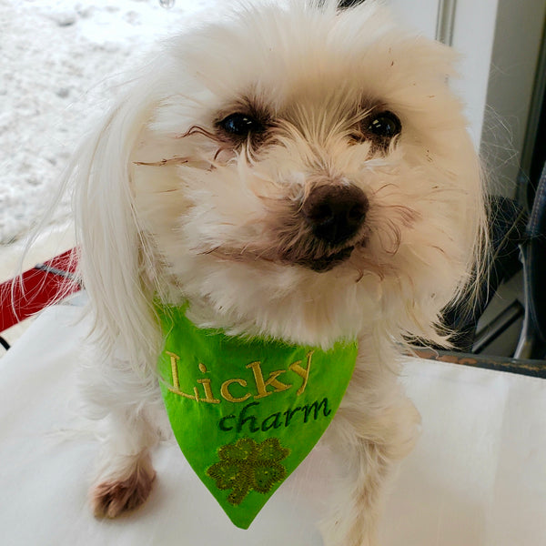"In the hoop Pet Bandana ""Licky Charm"" St. Patricks Day embroiery design"