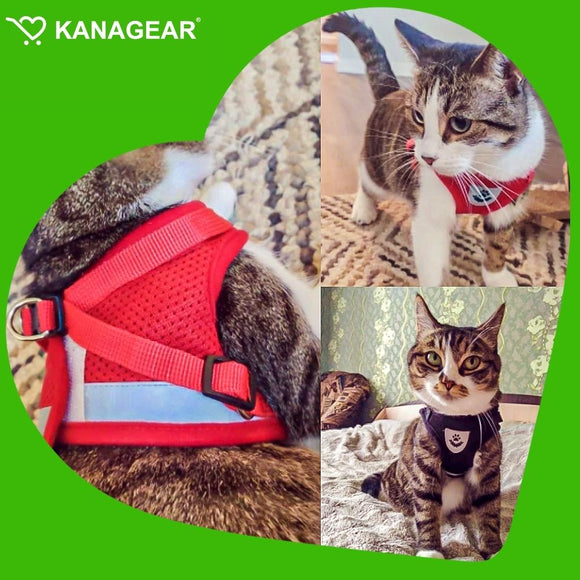 Infinite Love Dog Bracelet Offer