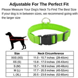 Light Up Safe-At-Night Dog Collar