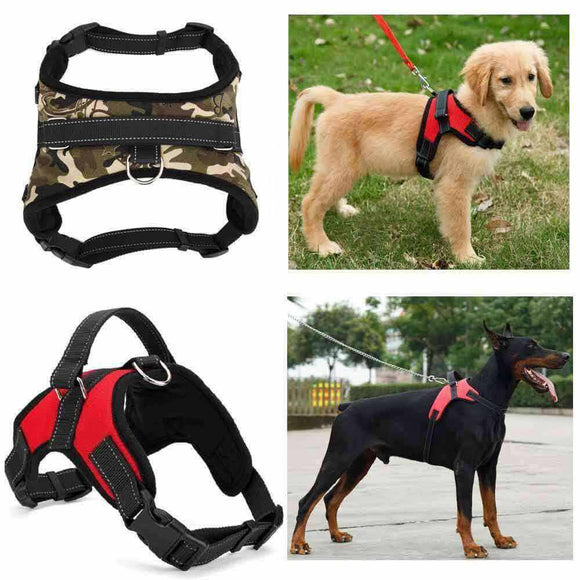 Adjustable Safety Dog Harness Offer