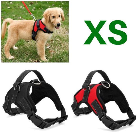 XS Adjustable Safety Dog Harness Offer