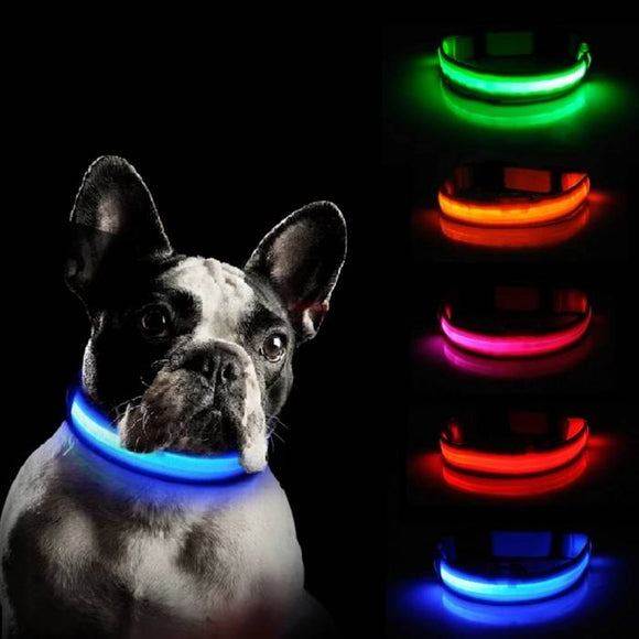 Light Up Safe-At-Night Dog Collar Offer