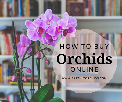 How to buy orchids online