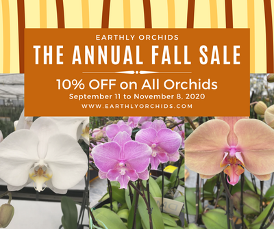 Annual Sale 10% OFF on All Orchids