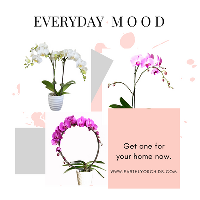 Orchid Plants | Style your home