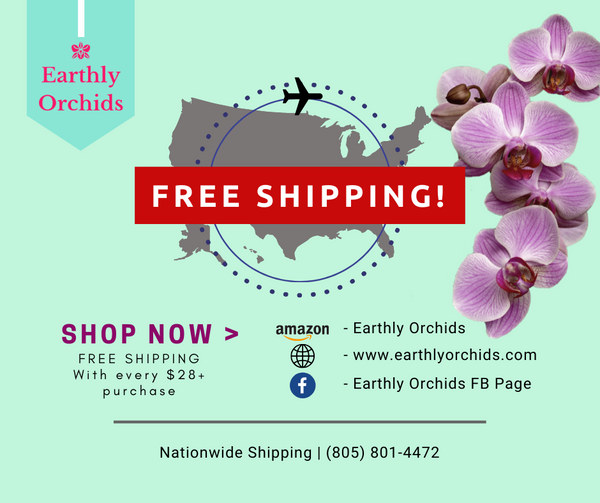 Orchids Free Shipping