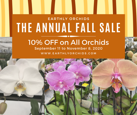 Buy orchids from the comfort of your home. Now you can order orchids online from Earthly Orchids. Get your orchids from the best orchid grower, order orchids from the nearest orchid shop Earthly Orchids, we have beautiful orchids for sale and orchids are now on sale, get your orchids for a less price, order orchids now!