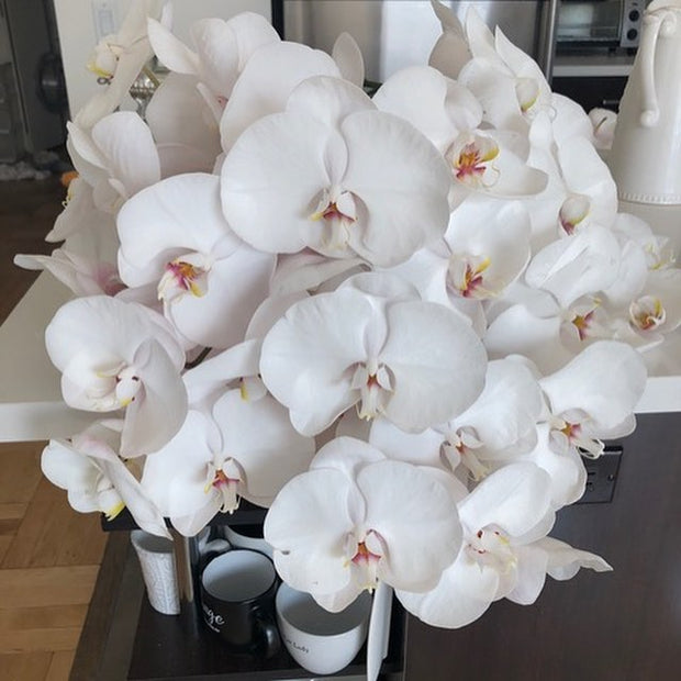 orchid delivery, orchids for sale, orchids online, orchids, orchid, flower, orchid flower, orchid plant, potted plant, potted orchids, cut orchids. flower plant, earthly orchids, orchid bouquet, flower bouquet, flower delivery, flower online, wholesale orchids, wholesale flowers, retail orchids, retail flowers, peach, peach orchid