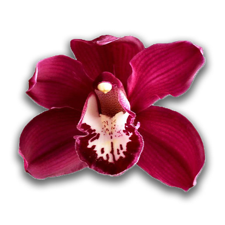 orchids, orchid, flower, orchid flower, orchid plant, potted plant, potted orchids, cut orchids. flower plant, earthly orchids, orchid bouquet, flower bouquet, flower delivery, flower online, red flower, red orchids