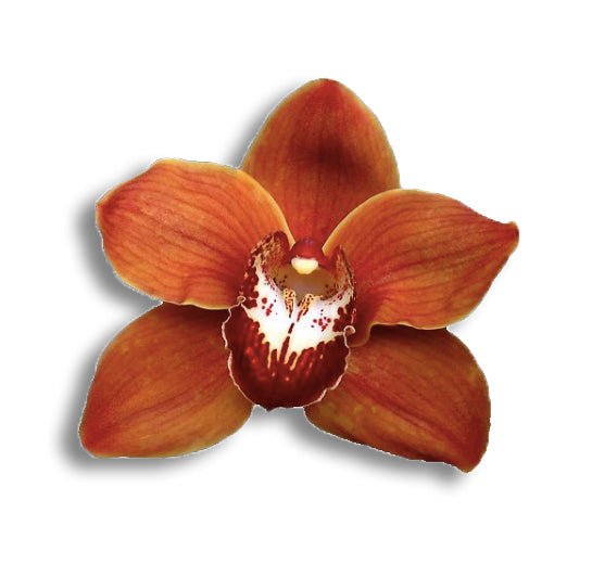 orchids, orchid, flower, orchid flower, orchid plant, potted plant, potted orchids, cut orchids. flower plant, earthly orchids, orchid bouquet, flower bouquet, flower delivery, flower online, orange flower. orange orchids