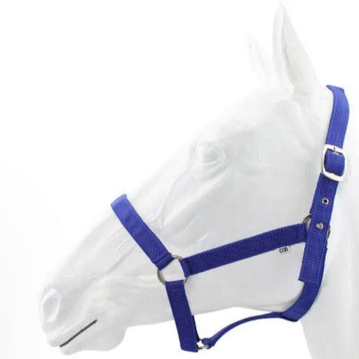 Webbing Halter with Lead