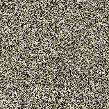 Because We Can II 12' Residential Carpet