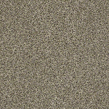 The Bark Side II Residential Carpet