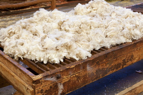 Freshly Sheared Wool