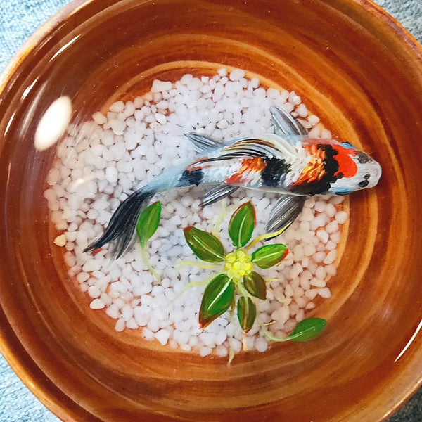 Triple Color Koi in Wooden Bowl