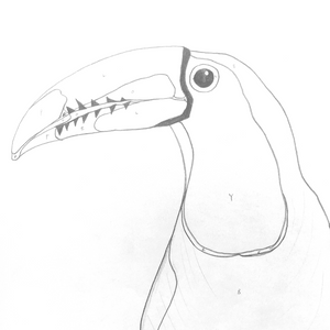 'Gerry' the Keel-billed Toucan