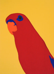'Red' the Red Lory Parrot