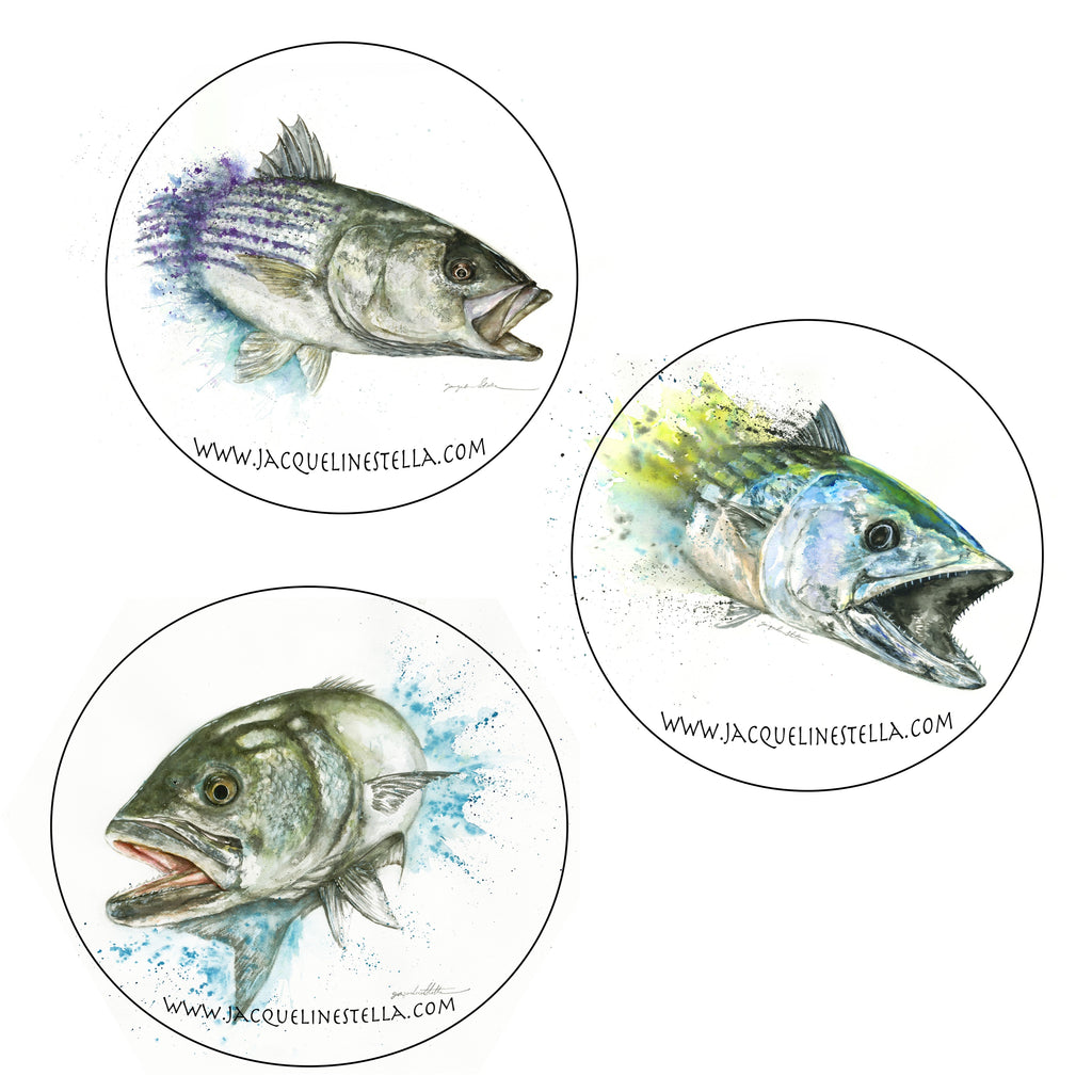 6-piece Striped Bass/Bonito/Bluefish coaster set