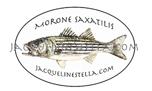 Striped Bass, Morone Saxatilis, weather proof Oval Vinyl Sticker