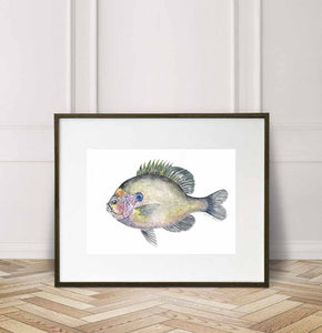 Coppernose Bluegill, Watercolor Painting Giclée Fine Art Print