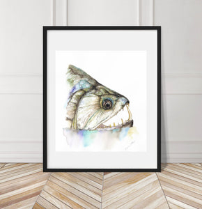 Payara Watercolor Painting Giclée Fine Art Print
