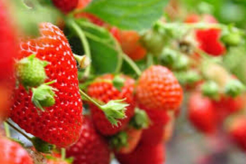 Red Climbing Strawberry Seeds, Garden Fruit Plant, Sweet And Delicious