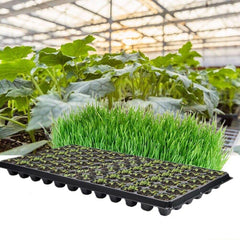 Seedling Starter Tray Seed Germination Plant Propagation