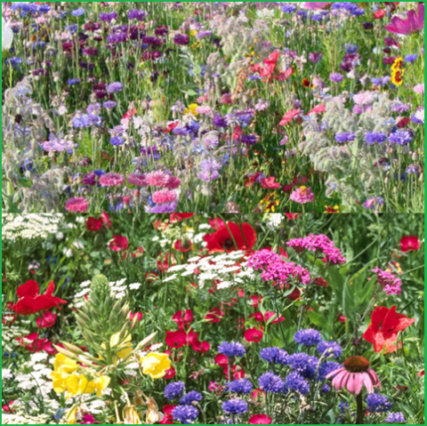 Image of Wild Scented Bee Cottage Garden Grass Seed Free Perennial Plant Mix Flower Seeds
