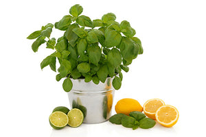 Cool Citrus Basil