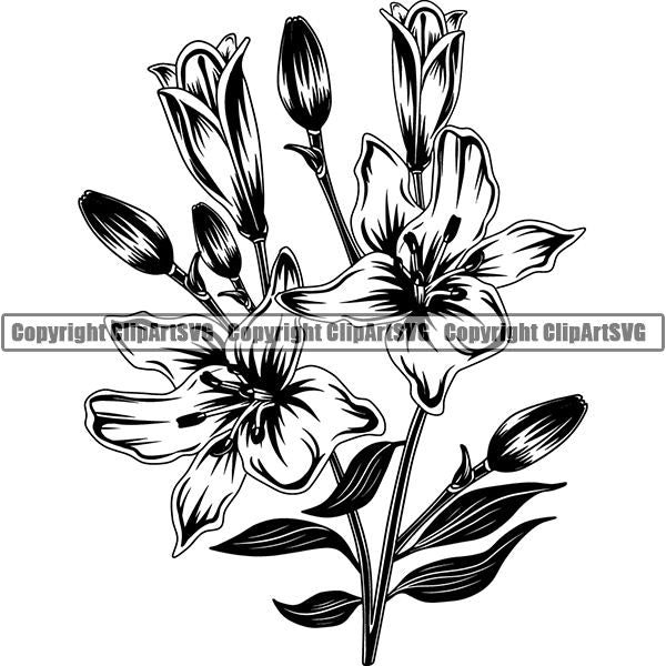 Nature Flower Lily 6yh6a.jpg