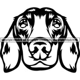 Animal Dog Dachshund Dog Breed Head Face ClipArt SVG 005