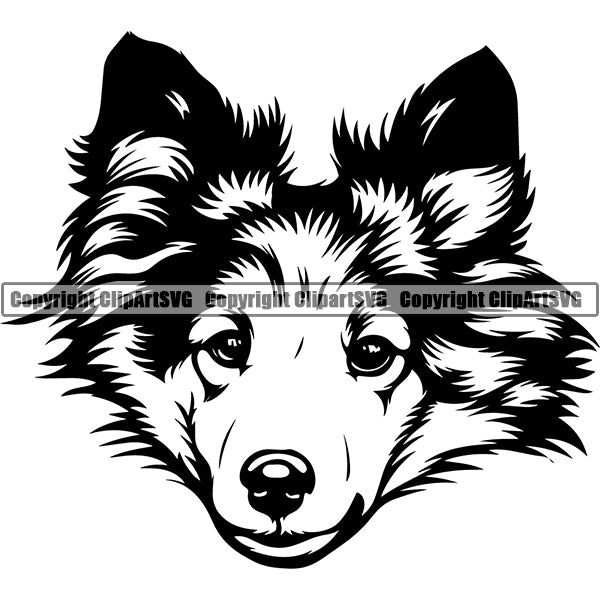 Shetland Sheepdog Dog Breed Head Face ClipArt SVG 002